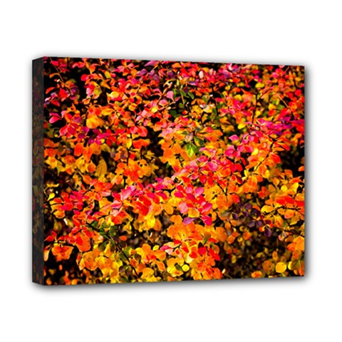 Orange, Yellow Cotoneaster Leaves In Autumn Canvas 10  X 8  by FunnyCow