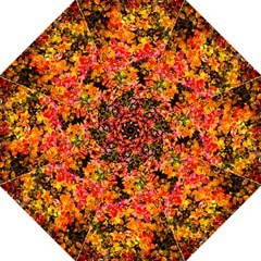 Orange, Yellow Cotoneaster Leaves In Autumn Folding Umbrellas by FunnyCow