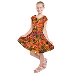 Orange, Yellow Cotoneaster Leaves In Autumn Kids  Short Sleeve Dress