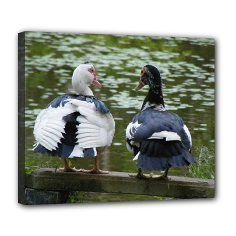 Muscovy Ducks At The Pond Deluxe Canvas 24  X 20   by ImphavokImpressions