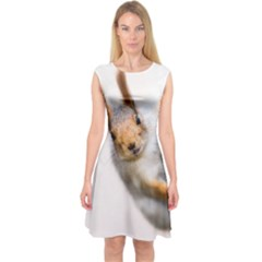 Curious Squirrel Capsleeve Midi Dress