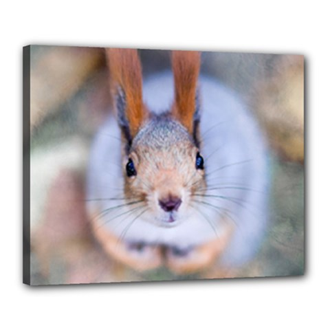 Squirrel Looks At You Canvas 20  X 16