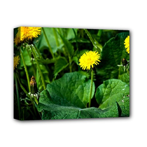 Yellow Dandelion Flowers In Spring Deluxe Canvas 14  X 11