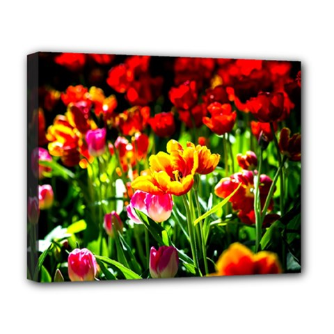 Colorful Tulips On A Sunny Day Deluxe Canvas 20  X 16