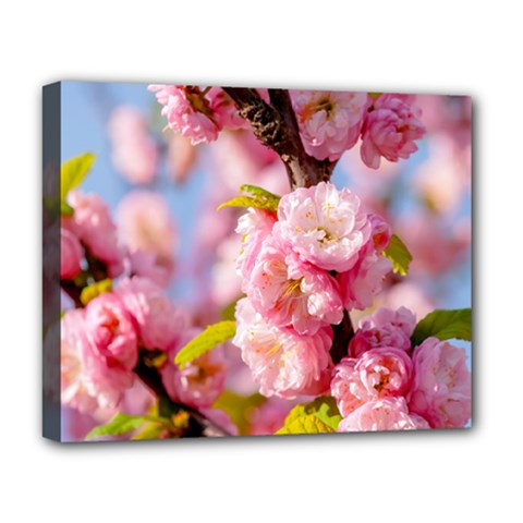 Flowering Almond Flowersg Deluxe Canvas 20  X 16