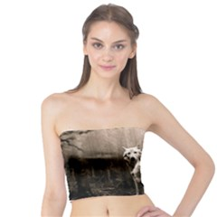 Wolfs Tube Top