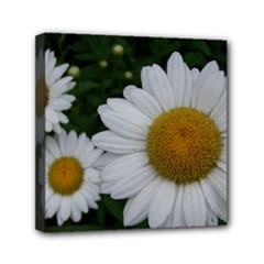 ANOTHER DAISY - Mini Canvas 6  x 6  (Stretched)