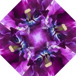 Purple Tulip - Folding Umbrella