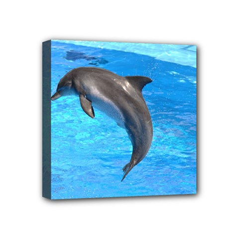 Jumping Dolphin Mini Canvas 4  X 4  (stretched) by dropshipcnnet