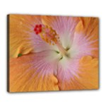 flower1 - Canvas 20  x 16  (Stretched)