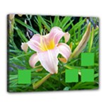Day Lily - Canvas 20  x 16  (Stretched)