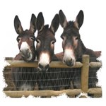 Three donks
