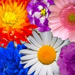 Lovely Flowers-more colors