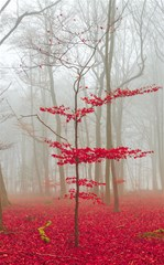 magic forest in red and white