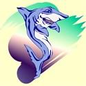 shark2s