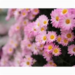 Chrysanthemum By Photo   Wall Calendar 11  X 8 5  (12 Months)   Tqvh4z5gybsj   Www Artscow Com Month