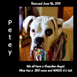 petey blk side name - ScrapBook Page 12  x 12