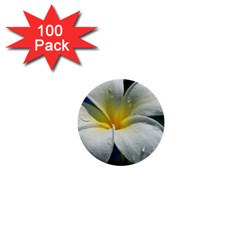 Frangipani Tropical Flower 100 Pack Mini Button (round) by Koalasandkangasplus