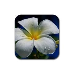 Frangipani Tropical Flower Rubber Drinks Coaster (square)