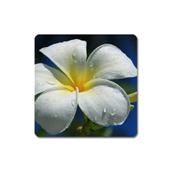 Frangipani Tropical Flower Large Sticker Magnet (square)