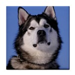 Alaskan Malamute Dog Tile Coaster