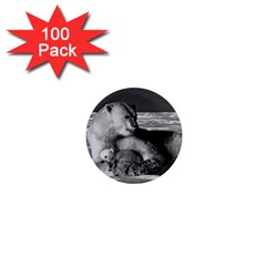 Vintage Usa Alaska Mother Polar Bear 1970 100 Pack Mini Magnet (round) by Vintagephotos