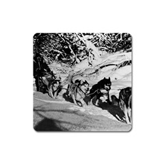 Vintage Usa Alaska Dog Sled Racing 1970 Large Sticker Magnet (square) by Vintagephotos