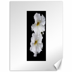 White Peonies   36  X 48  Unframed Canvas Print by Elanga
