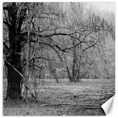 Black And White Forest 16  X 16  Unframed Canvas Print