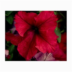 Red Peonies Glasses Cleaning Cloth by Elanga