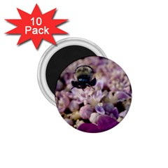 Flying Bumble Bee 10 Pack Small Magnet (round) by Elanga