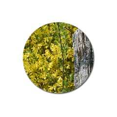 Yellow Bells Large Sticker Magnet (round) by Elanga