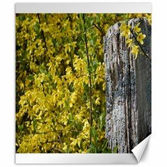 Yellow Bells 20  X 24  Unframed Canvas Print