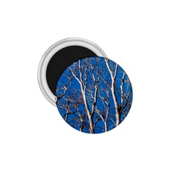 Trees On Blue Sky Small Magnet (round)