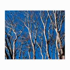 Trees on Blue Sky Twin-sided Glasses Cleaning Cloth by Elanga
