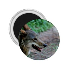 Red Wolf 2 25  Button Magnet by AnimalLover