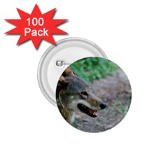 Red Wolf 1 75  Button (100 Pack) by AnimalLover