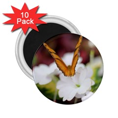 Butterfly 159 2 25  Button Magnet (10 Pack)
