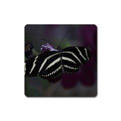 Butterfly 059 001 Magnet (square) by pictureperfectphotography