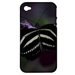 Butterfly 059 001 Apple Iphone 4/4s Hardshell Case (pc+silicone) by pictureperfectphotography