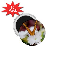 Butterfly 159 1.75  Button Magnet (10 pack) by pictureperfectphotography