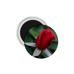 Sallys Flowers 032 001 1 75  Button Magnet by pictureperfectphotography