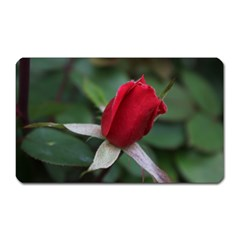 Sallys Flowers 032 001 Magnet (rectangular) by pictureperfectphotography