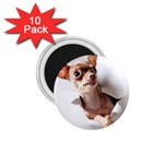 Chihuahua 1.75  Button Magnet (10 pack)
