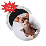 Chihuahua 2.25  Button Magnet (10 pack)