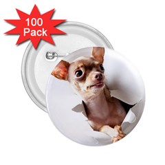 Chihuahua 2 25  Button (100 Pack)