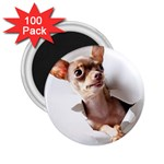 Chihuahua 2.25  Button Magnet (100 pack)