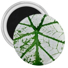 Leaf Patterns 3  Button Magnet by natureinmalaysia