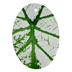 Leaf Patterns Oval Ornament by natureinmalaysia