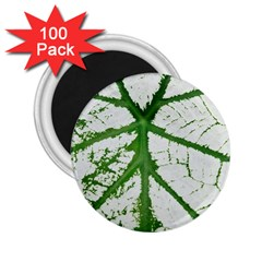 Leaf Patterns 2 25  Button Magnet (100 Pack) by natureinmalaysia